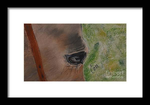 Horse Framed Print featuring the drawing Eye To Eye by Cori Solomon