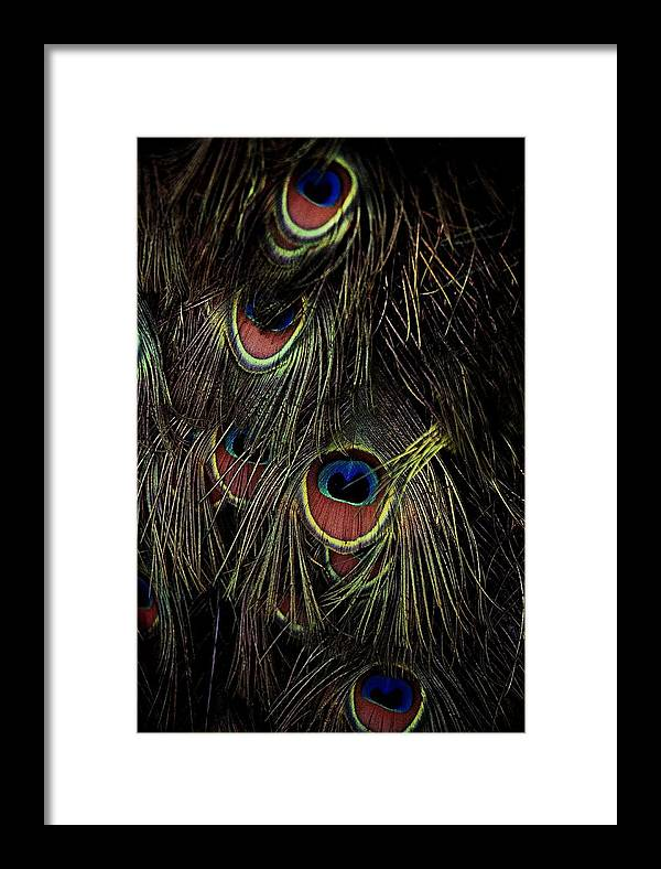 Peacock Framed Print featuring the photograph Eyes by Alfredo Martinez