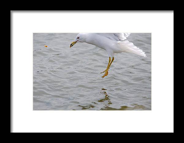 Roy Williams Framed Print featuring the photograph Eyes On The Prize 2 by Roy Williams