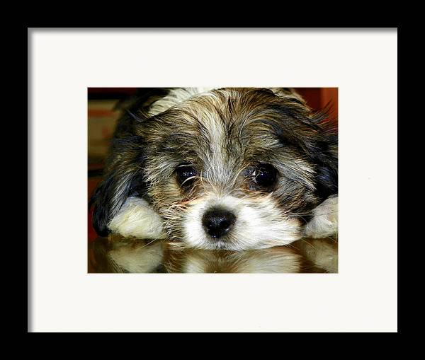 Puppies Framed Print featuring the photograph Eyes On You by Karen Wiles