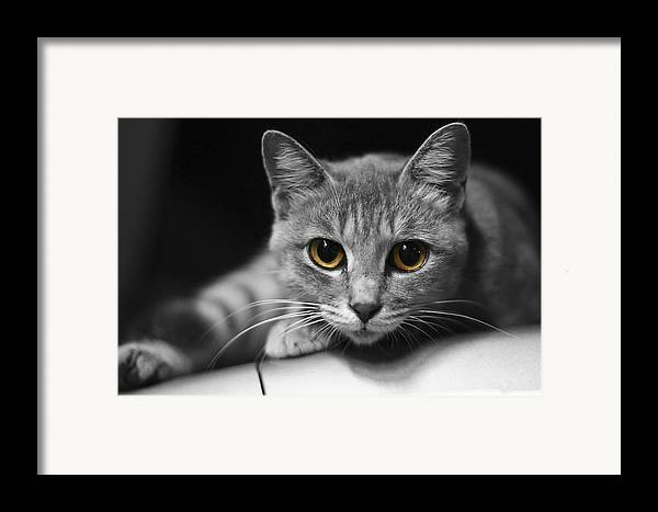 Cat Framed Print featuring the photograph Eyes Open Wide by JianGang Wang