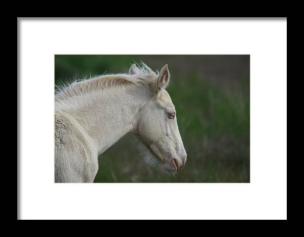 Wild Framed Print featuring the photograph Eyes So Blue by Gene Praag