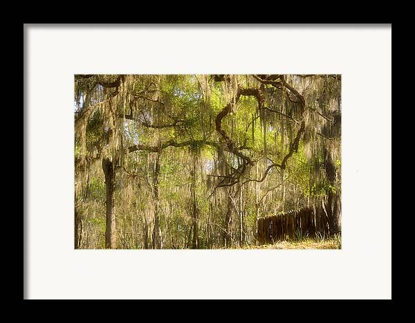 Spanish Framed Print featuring the photograph Fabulous Spanish Moss by Christine Till