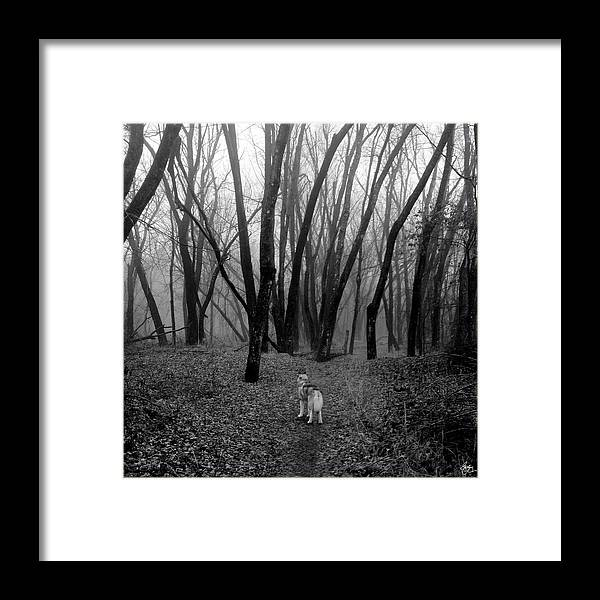 Husky Framed Print featuring the photograph Facing Your Fears by Wayne King