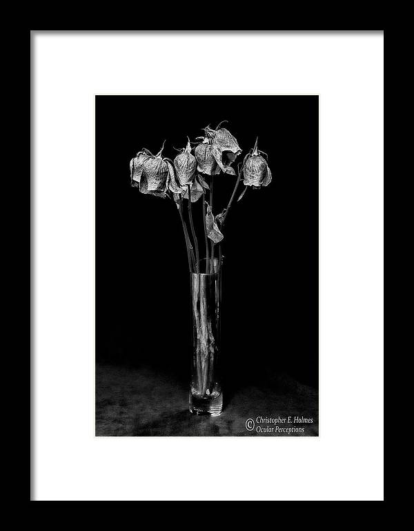 Flower Framed Print featuring the photograph Faded Long Stems - Bw by Christopher Holmes