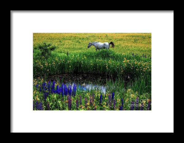 Horse Framed Print featuring the photograph Fairy Tale by Brenda Giasson