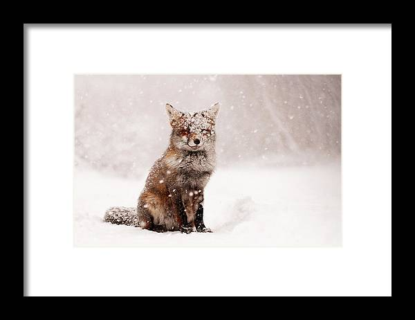 Fox Framed Print featuring the photograph Fairytale Fox _ Red Fox in a Snow Storm by Roeselien Raimond