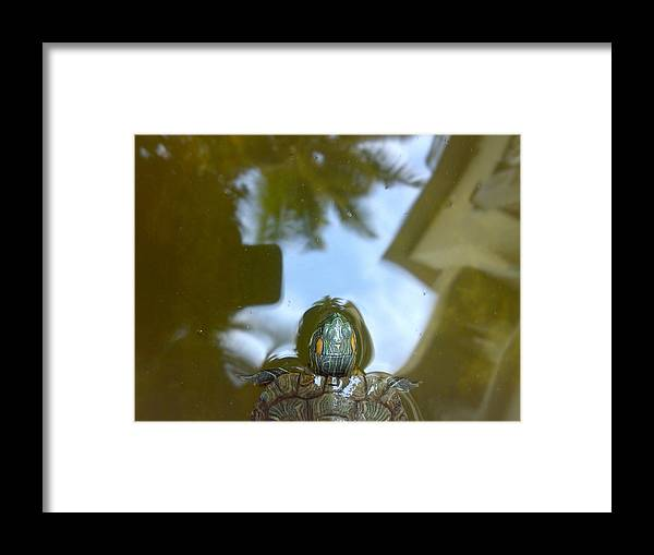 Aquatic Framed Print featuring the photograph Faizizse by Syed Suhaib Pasha