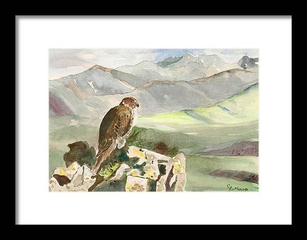 Falcon Framed Print featuring the painting Falcon by Christine Lathrop