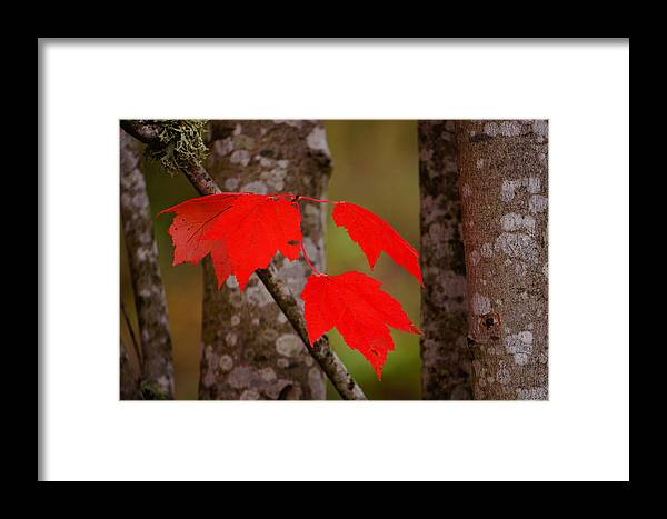 Autumn Framed Print featuring the photograph Fall Aflame by Ronda Broatch