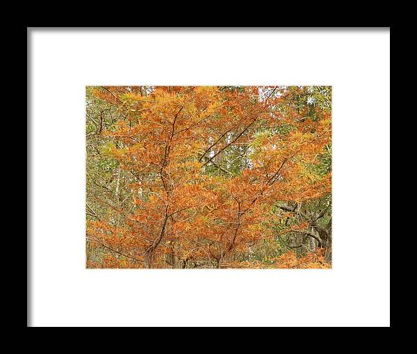 Orange Framed Print featuring the painting Fall Beauty by Ione Hedges