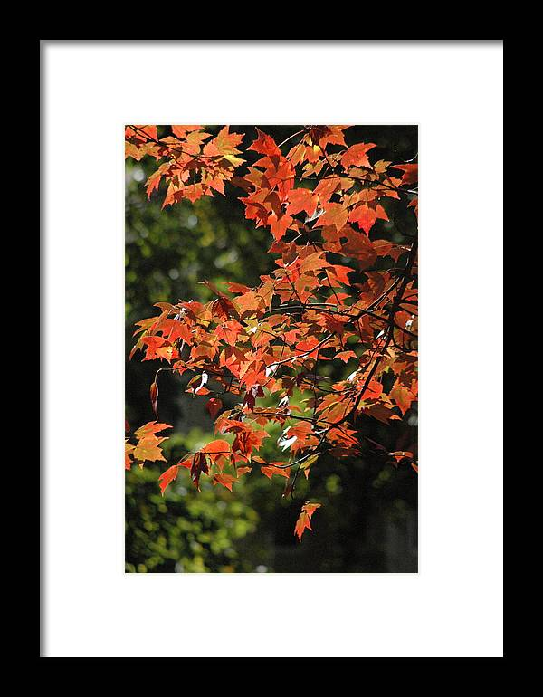Fall Colors Framed Print featuring the photograph Autumn's Best by Les Scarborough