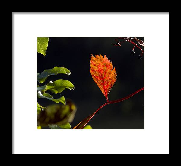 Landscape Framed Print featuring the photograph Fall Color 2 by David Lester