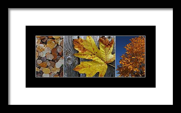 Autumn Framed Print featuring the photograph Fall Colors Triptych by Patricia Strand
