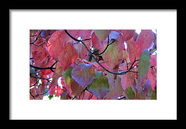 Duane Mccullough Framed Print featuring the photograph Fall Dogwood Leaf Colors 2 by Duane McCullough