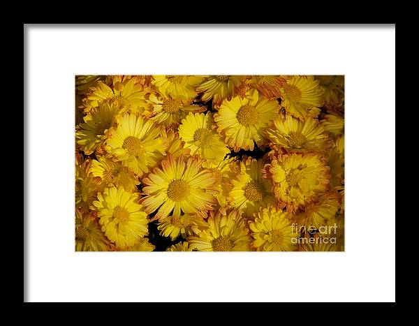 Fall Flowers Framed Print featuring the photograph Fall Flowers by June Hatleberg Photography