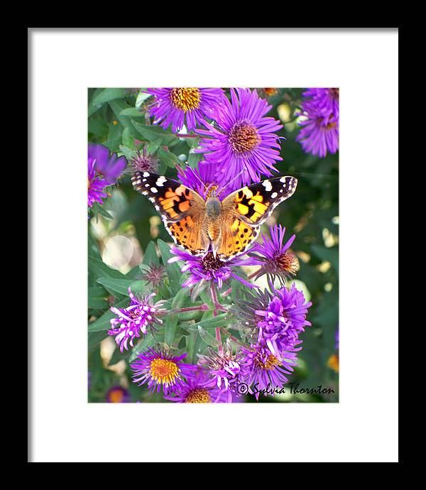 Butterfly Framed Print featuring the photograph Fall Flutterby by Sylvia Thornton