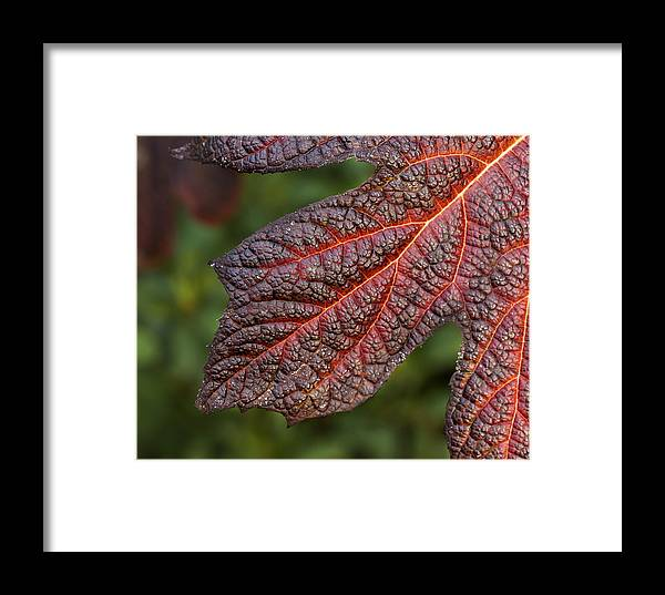 Fall Leaves Framed Print featuring the photograph Fall Foliage 4 by Robert Ullmann