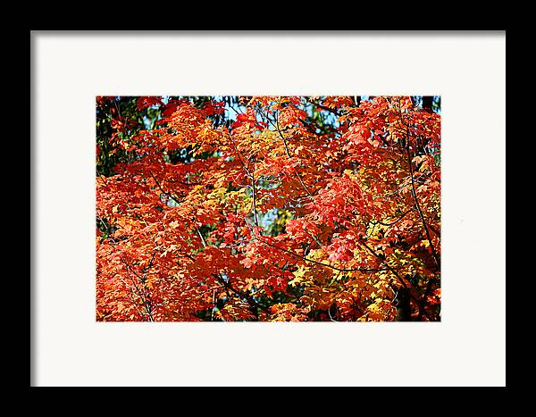 Metro Framed Print featuring the photograph Fall Foliage Colors 22 by Metro DC Photography