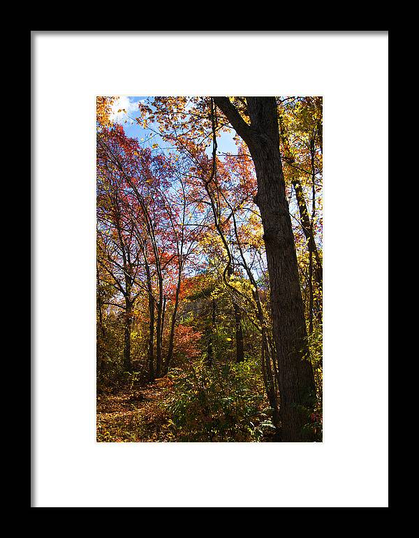 Fall Foliage Framed Print featuring the photograph Fall Foliage Iv by Michelle Velencia Deslauriers