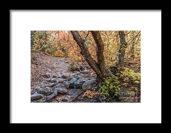 Landscape Framed Print featuring the photograph Fall In Miller Canyon 19 by Al Andersen