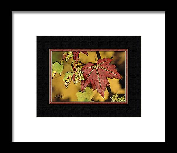 Fall Framed Print featuring the digital art Fall Leaves by Diane Hagler