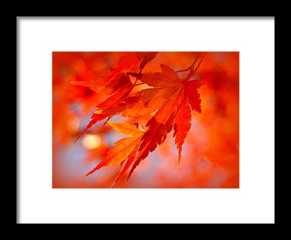 Leaves Framed Print featuring the photograph Fall Leaves by Nathan Abbott