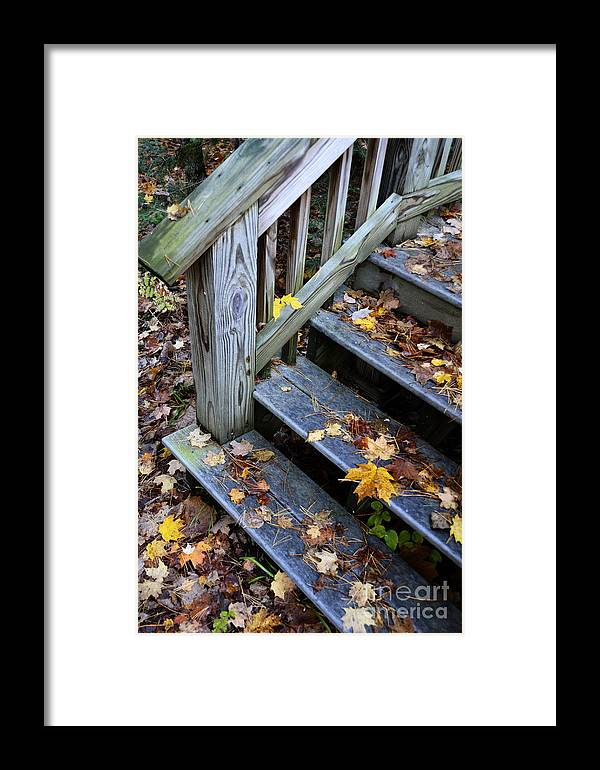 Wet Framed Print featuring the photograph Fall Leaves On Steps by Birgit Tyrrell