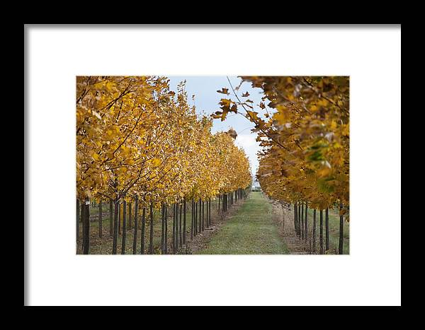 Fall Framed Print featuring the photograph Fall Nursery Colors by Nicole Berna