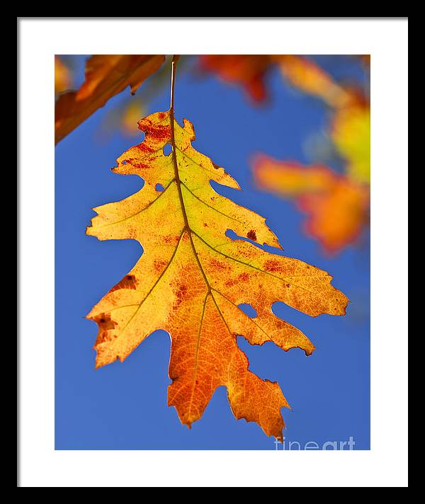 Fall oak leaf by Elena Elisseeva