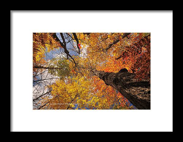 Landscape Framed Print featuring the photograph Fall Poplar Leaves Yellows Oranges 2899 by Marie Fierek