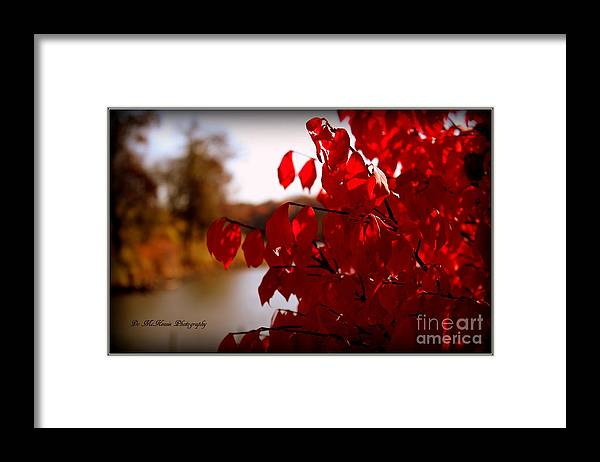 Fall Colors Framed Print featuring the photograph Fall Scenery by Dolores McKenzie