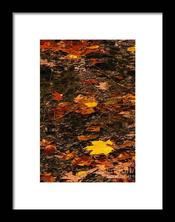 Stream Framed Print featuring the photograph Fall Stream Bed by Paul W Faust - Impressions of Light