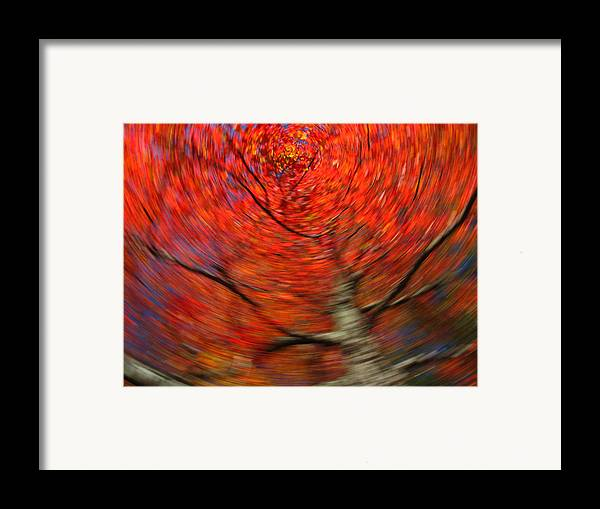 Intentional Camera Movement Framed Print featuring the photograph Fall Tree Carousel by Juergen Roth