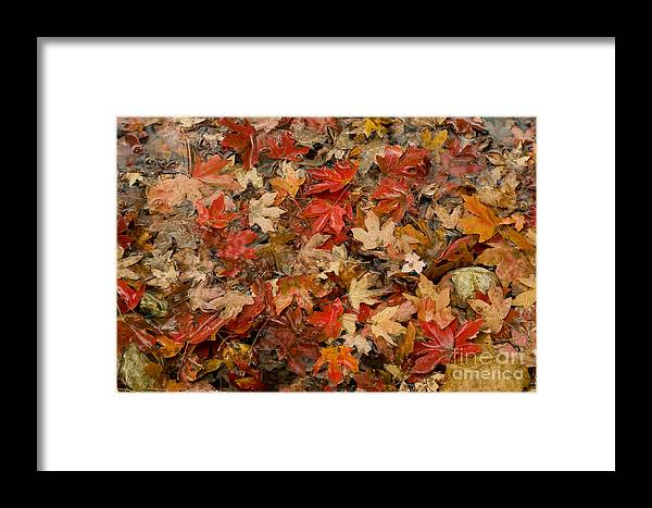 Lost Maples State Natural Area Framed Print featuring the photograph Fallen Leaves by Bob Phillips