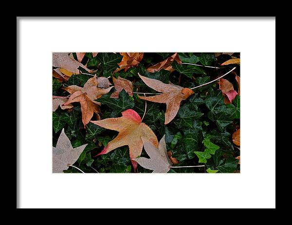 Leaves Framed Print featuring the photograph Fallen Leaves in Autumn by Kirsten Giving