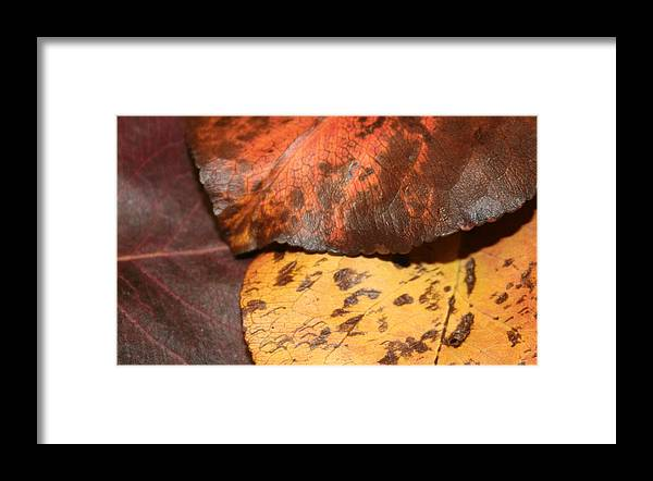 Leaf Framed Print featuring the photograph Fallen Leaves by Rob Cruise