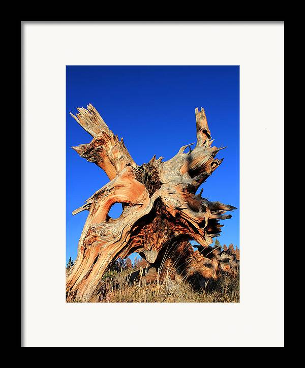 Tree Roots Framed Print featuring the photograph Fallen by Shane Bechler