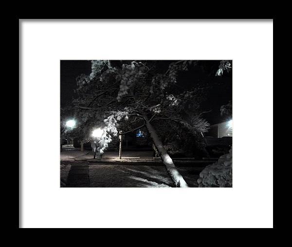 Tree Framed Print featuring the photograph Fallen Tree by Nicole Zanier