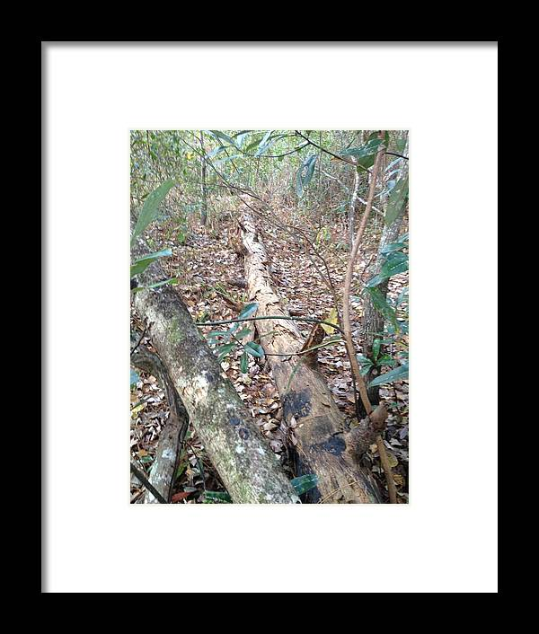 Tree Framed Print featuring the photograph Fallen Tree by Ron Hedges