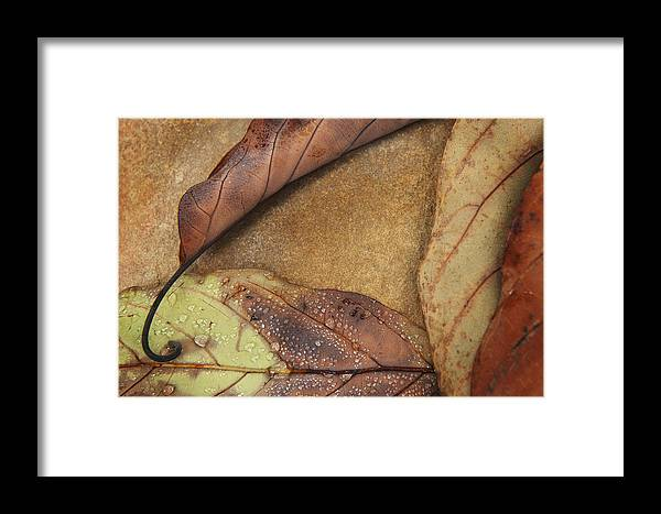 Nature Framed Print featuring the photograph Fallen Triangle by Sammy Miller