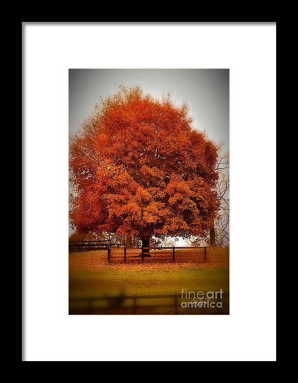 Falling Down Framed Print featuring the photograph Falling Down by Cris Hayes