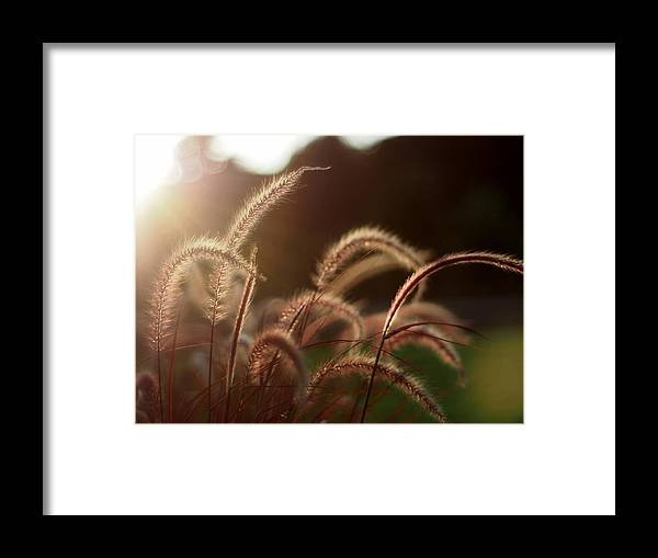 Sunset Framed Print featuring the photograph Falling Light by Atchayot Rattanawan