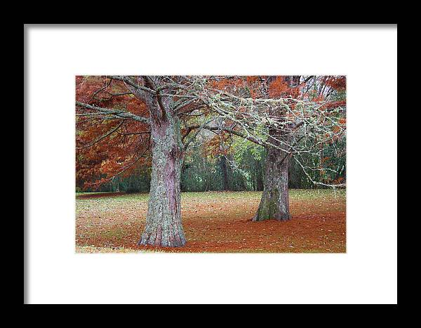Orange Framed Print featuring the photograph Falling Of The Leaves by Eagle Eye Photographers