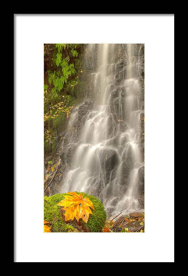 Noren Framed Print featuring the photograph Falling On The Leaf by Jean Noren