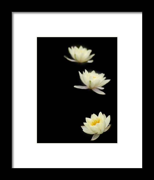 Water Lily Framed Print featuring the photograph Falling Stars by Rebecca Cozart