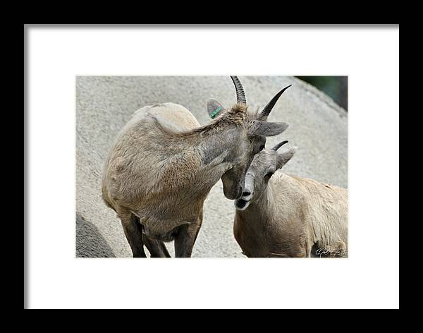 Lion Framed Print featuring the photograph Family Fun At The Buffalo Zoo by Michael Frank Jr