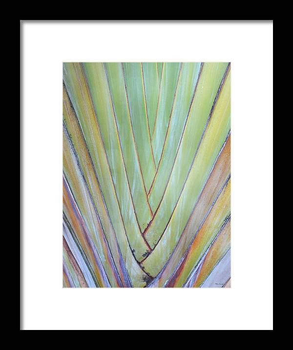 Duane Mccullough Framed Print featuring the photograph Fan Palm Abstract 2 by Duane McCullough