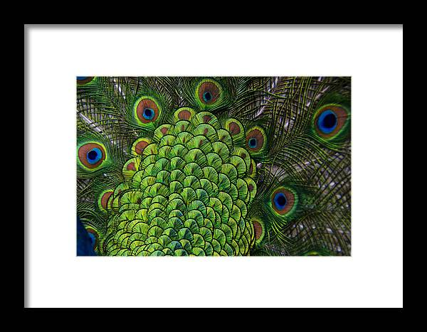 Amazing Framed Print featuring the photograph Fantasy Of Color by Yaacov Herling
