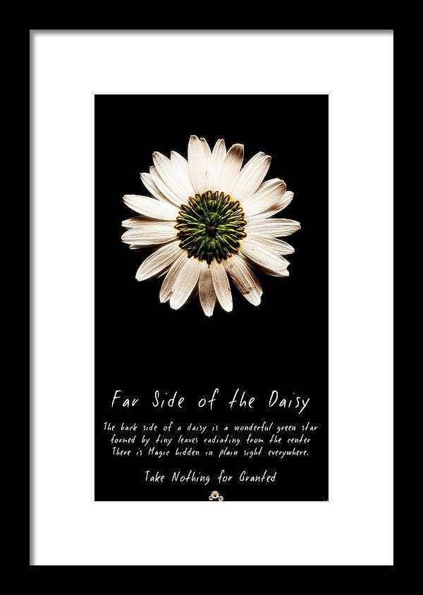 Daisy Framed Print featuring the photograph Far Side Of The Daisy Fractal Version by Weston Westmoreland